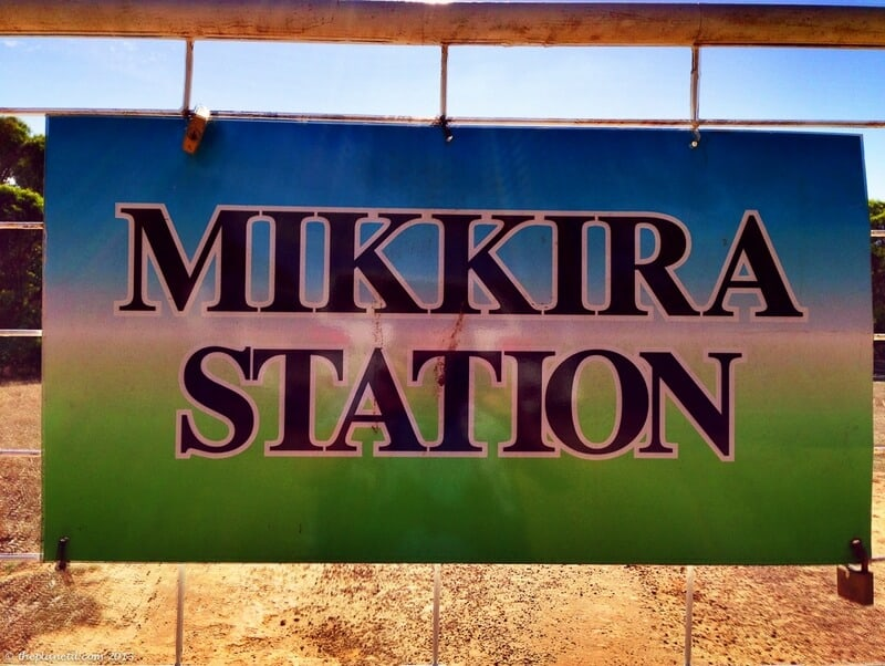 koalas South Australia Mikkira Station