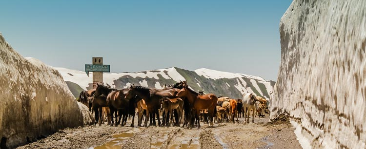 travel to kyrgyzstan   horses at mountain pass