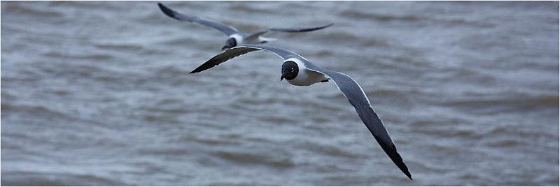 lake charles birds flying