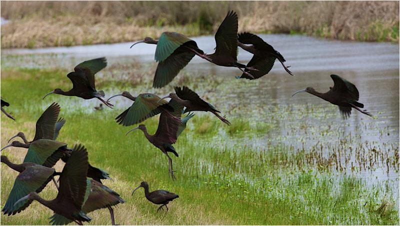 lake charles birds