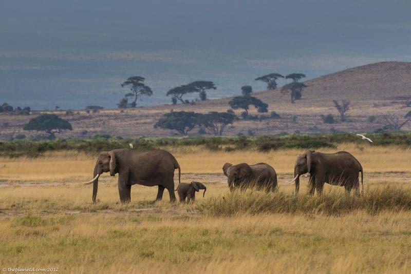 lake nakuru elephants