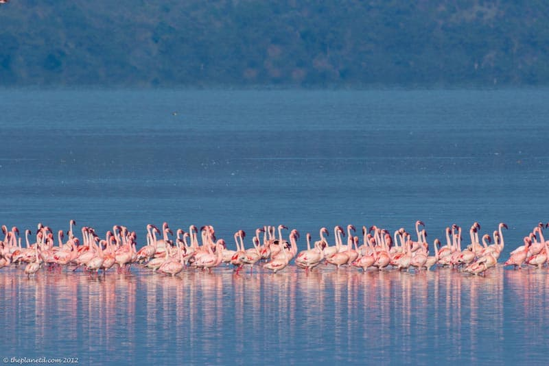 holiday destinations in africa | flamingoes on lake in kenya