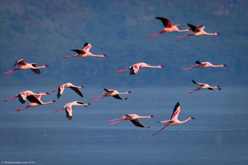 Kenya's Incredible Lake Nakuru