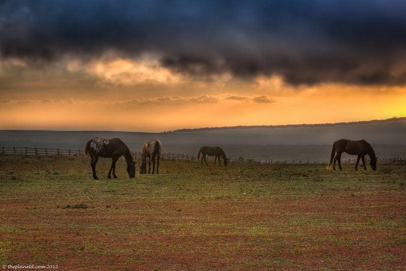 lanai photos horses