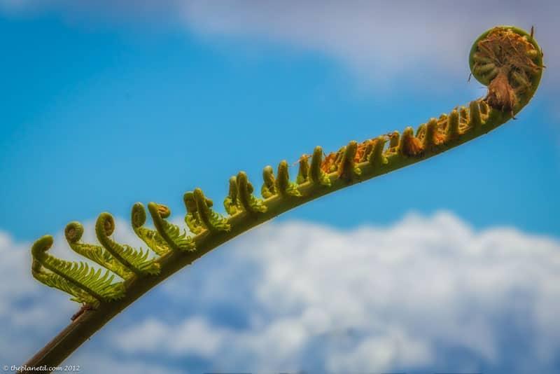 lanai pictures plant