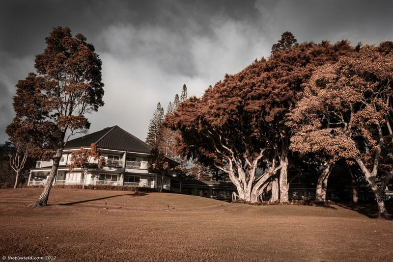 lanai pictures trees