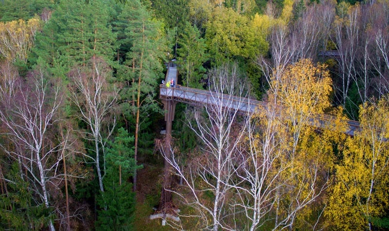 adventures in lithuania treetop walking