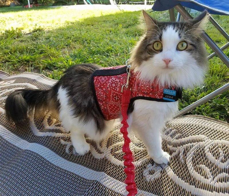 living in an rv - cat and pet travel