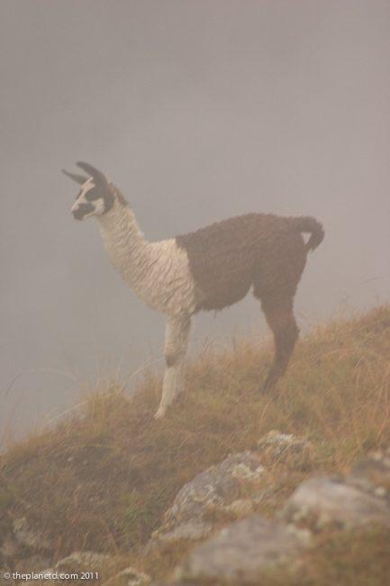 machu-picchu-inca-trail-peru-49