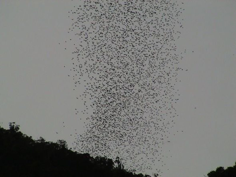 bats in forest