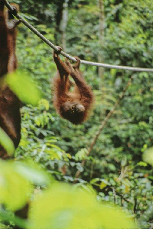 things to do in Malaysia Borneo