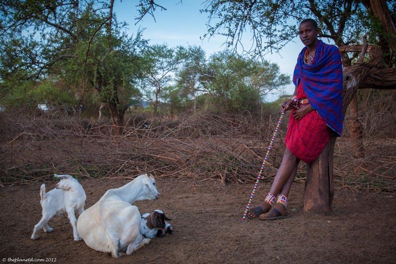 maasai man with his goats