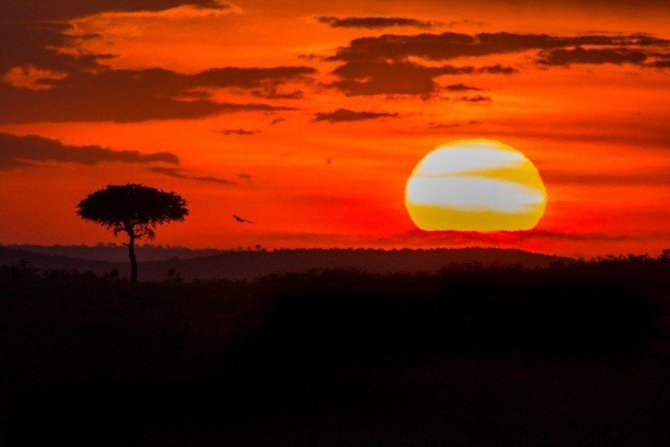 kenya pictures masai mara sunset with lone tree