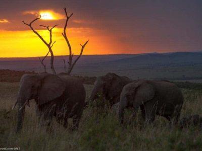 Kenya Safari – The Masai Mara Experience