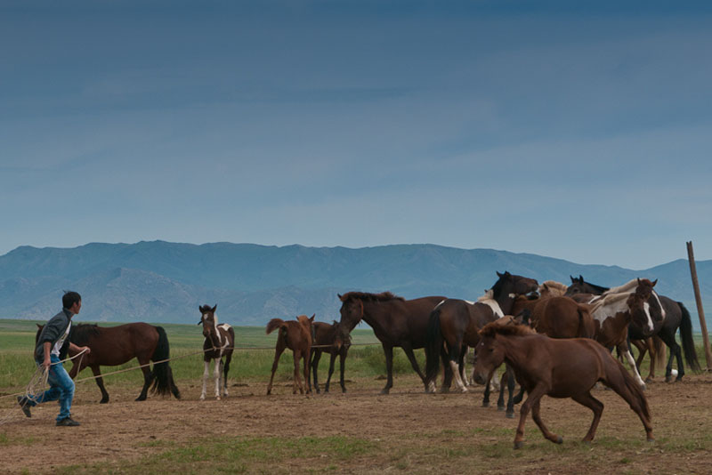 horses mongolia