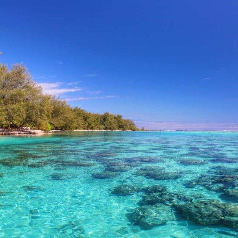 moorea island coral reef