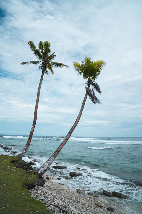 Lone palm trees in American Samoa