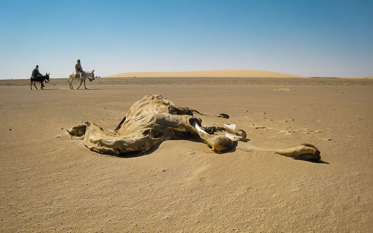 Camel Graveyard in the isolated region of the Nubian Desert