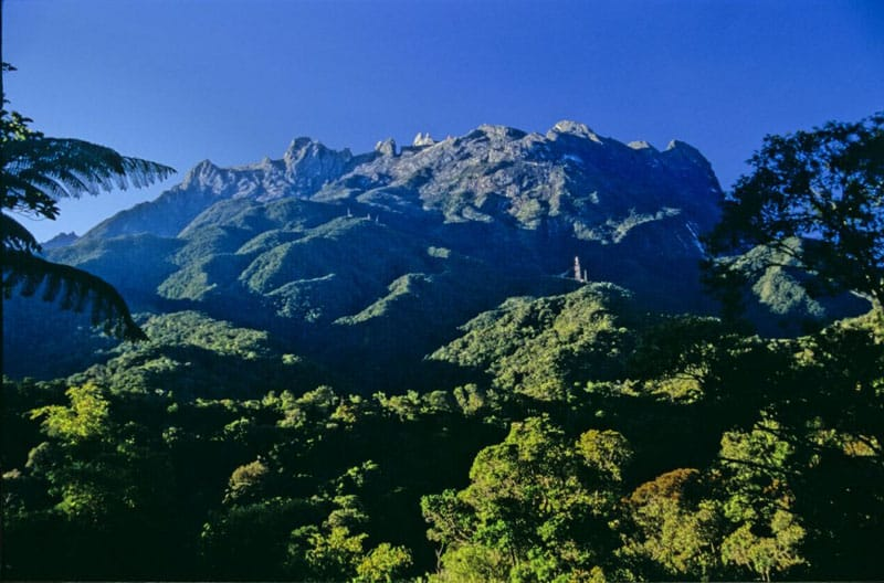 forest view of mount kinabalu borneo