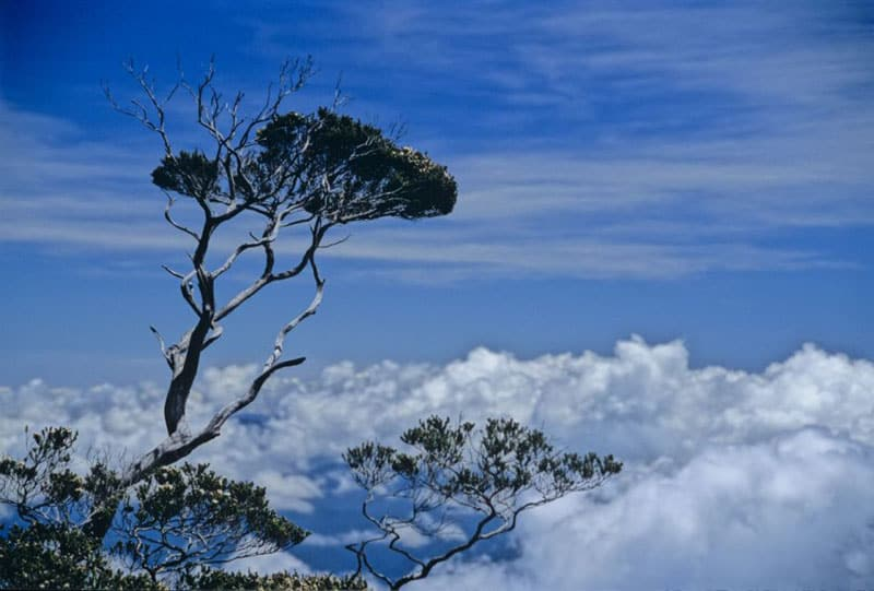 tree clouds trek up kinabalu borneo