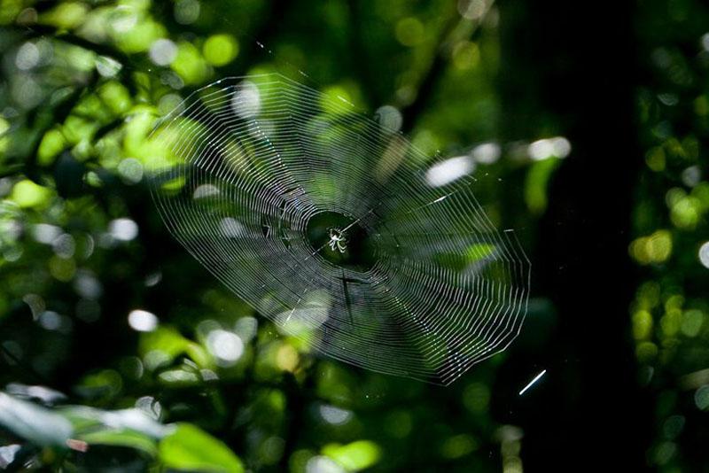 spiderweb volcano
