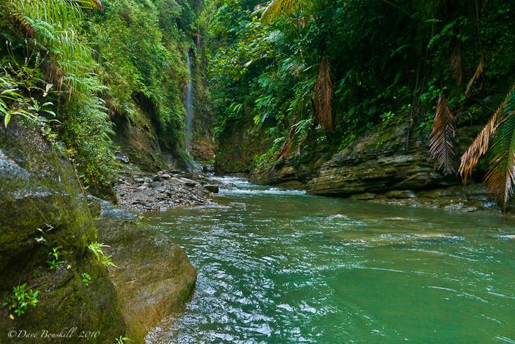 navua river forest