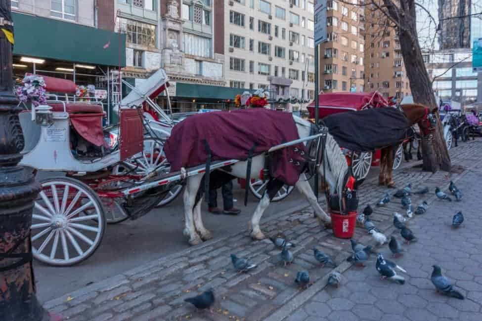 nyc christmas horses and carriage