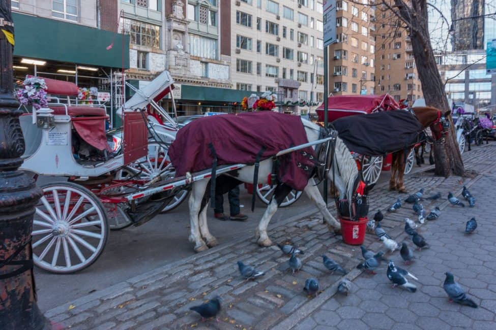new-york-city-christmas-carriage-rides