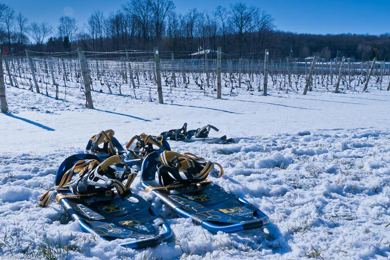 niagara winter winery tour snowshoe