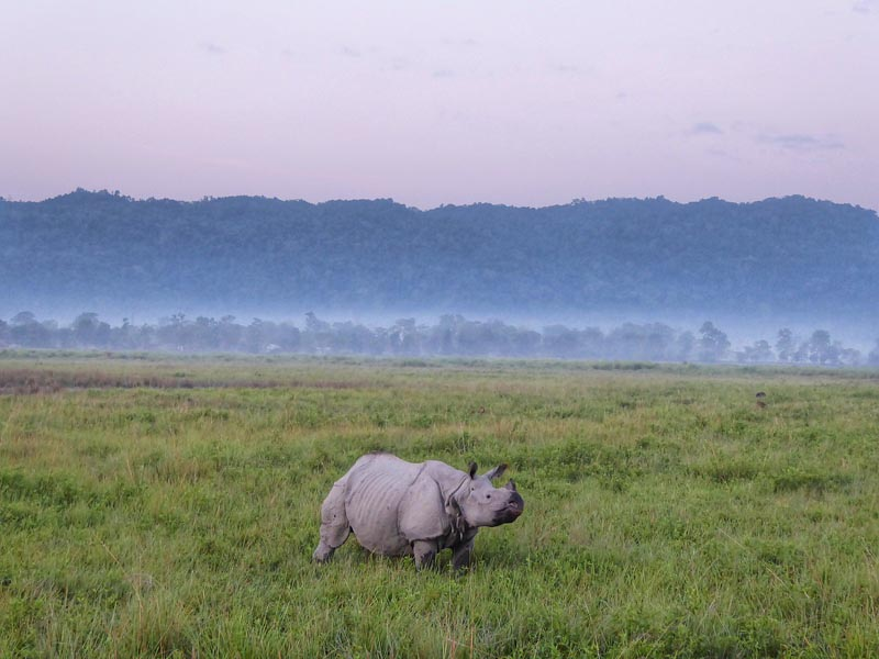 endangered wildlife north india rhino