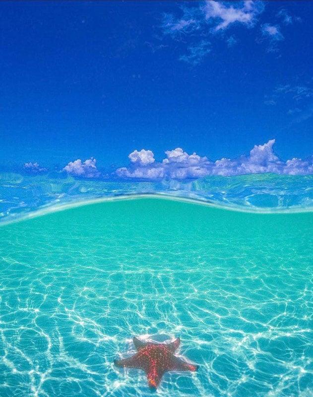ocean starfish cayman island things to do
