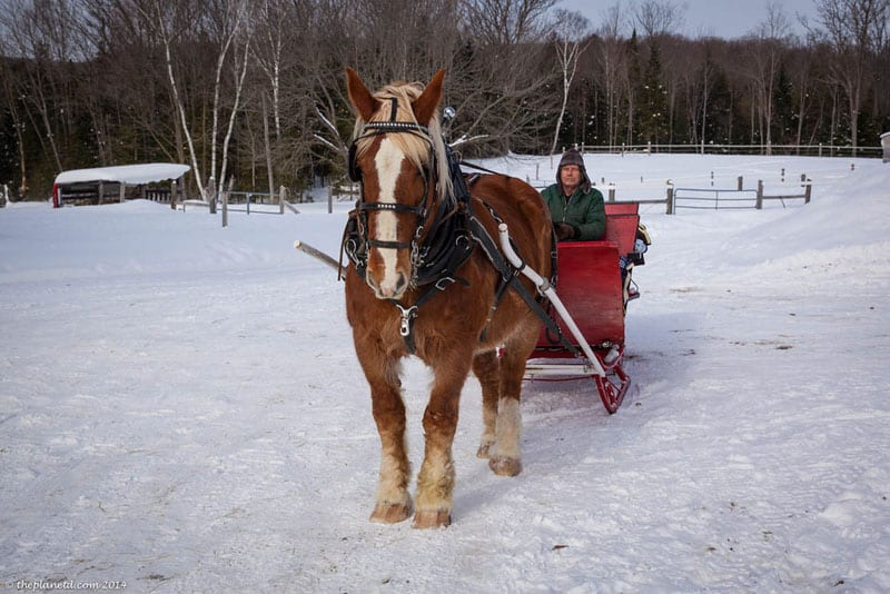 old fashioned winter horse