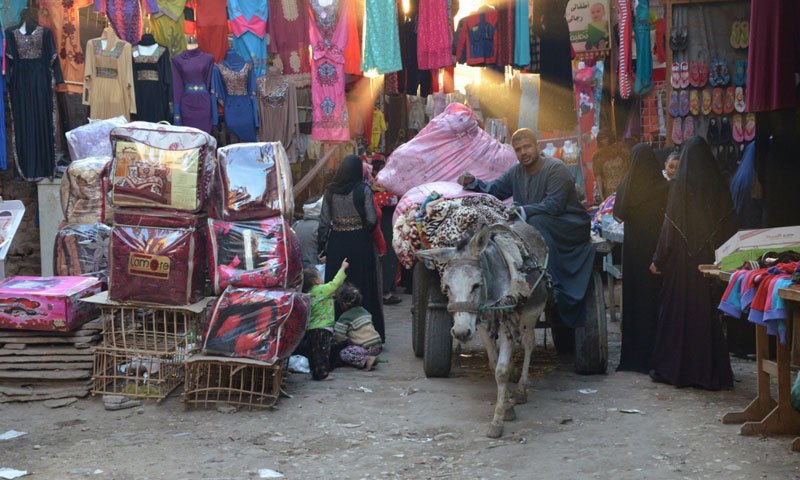 open mind in egypt donkey