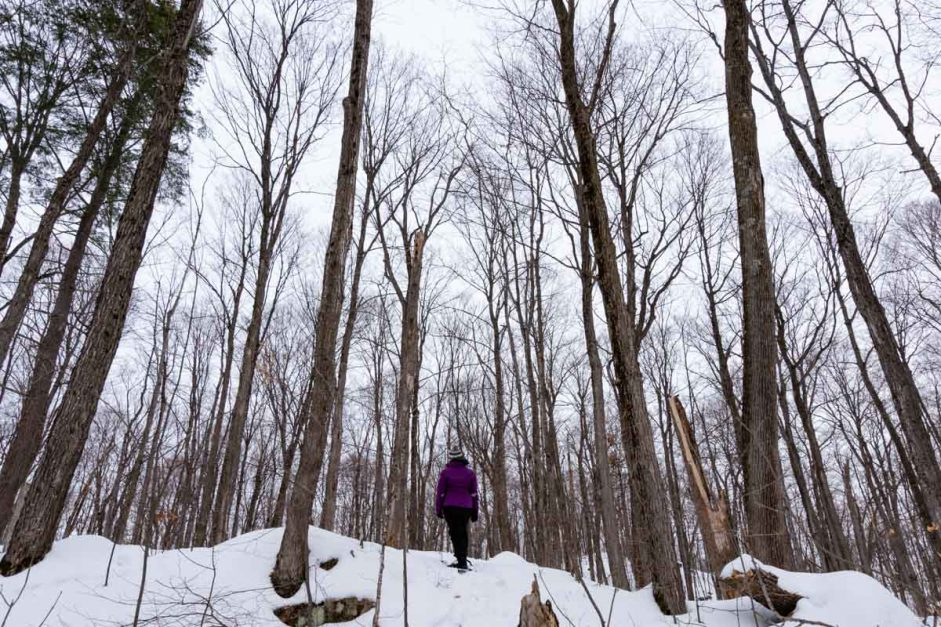 Snowshoe in Gatineau NAtional Park Ottawa