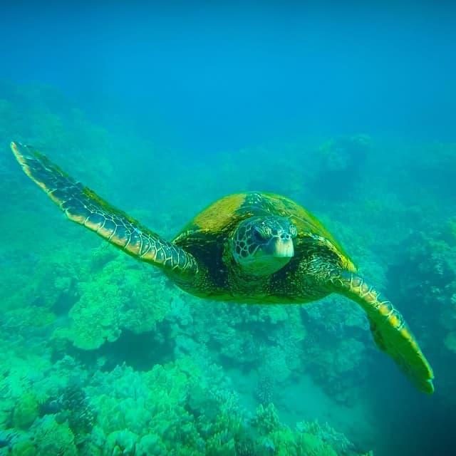 outrigger canoe polynesia sea turtle