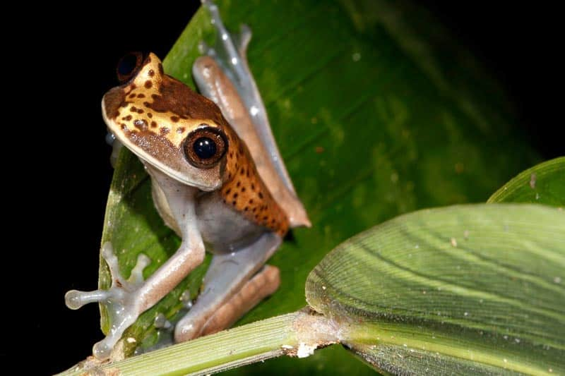 sustainable rainforest travel frog