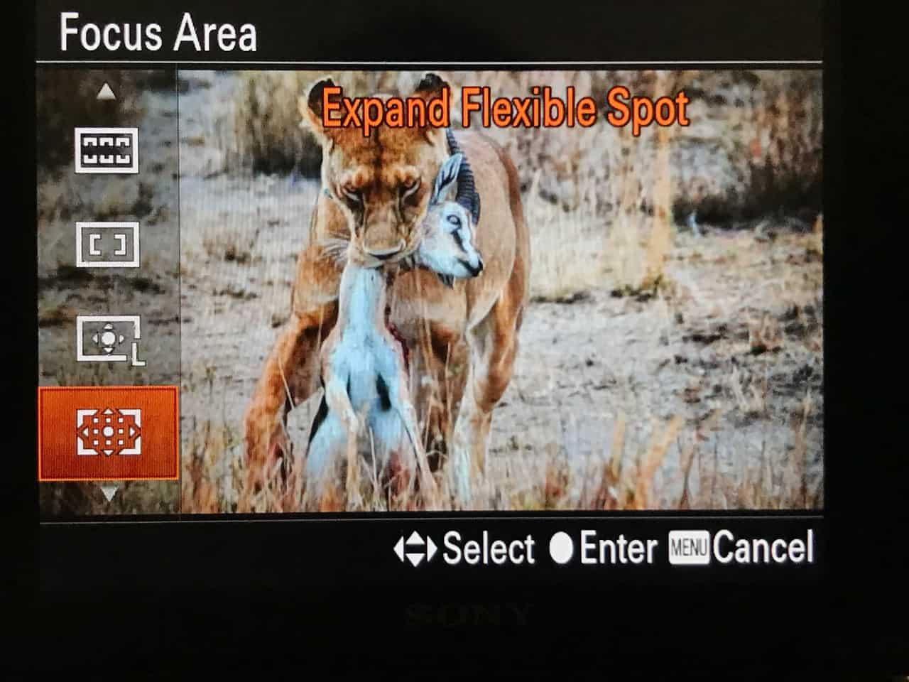 photo safari tips africa focus