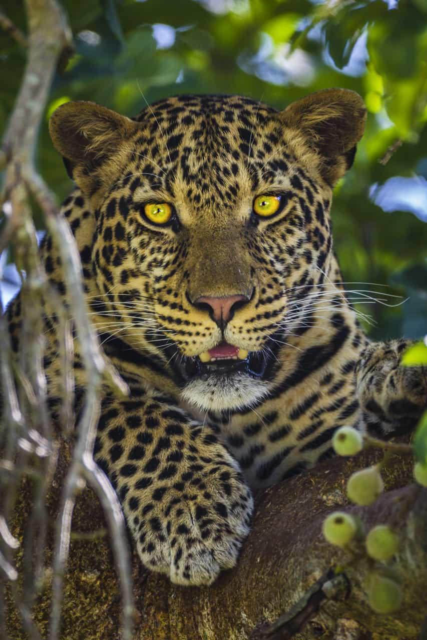 Photo safari tip africa eyes