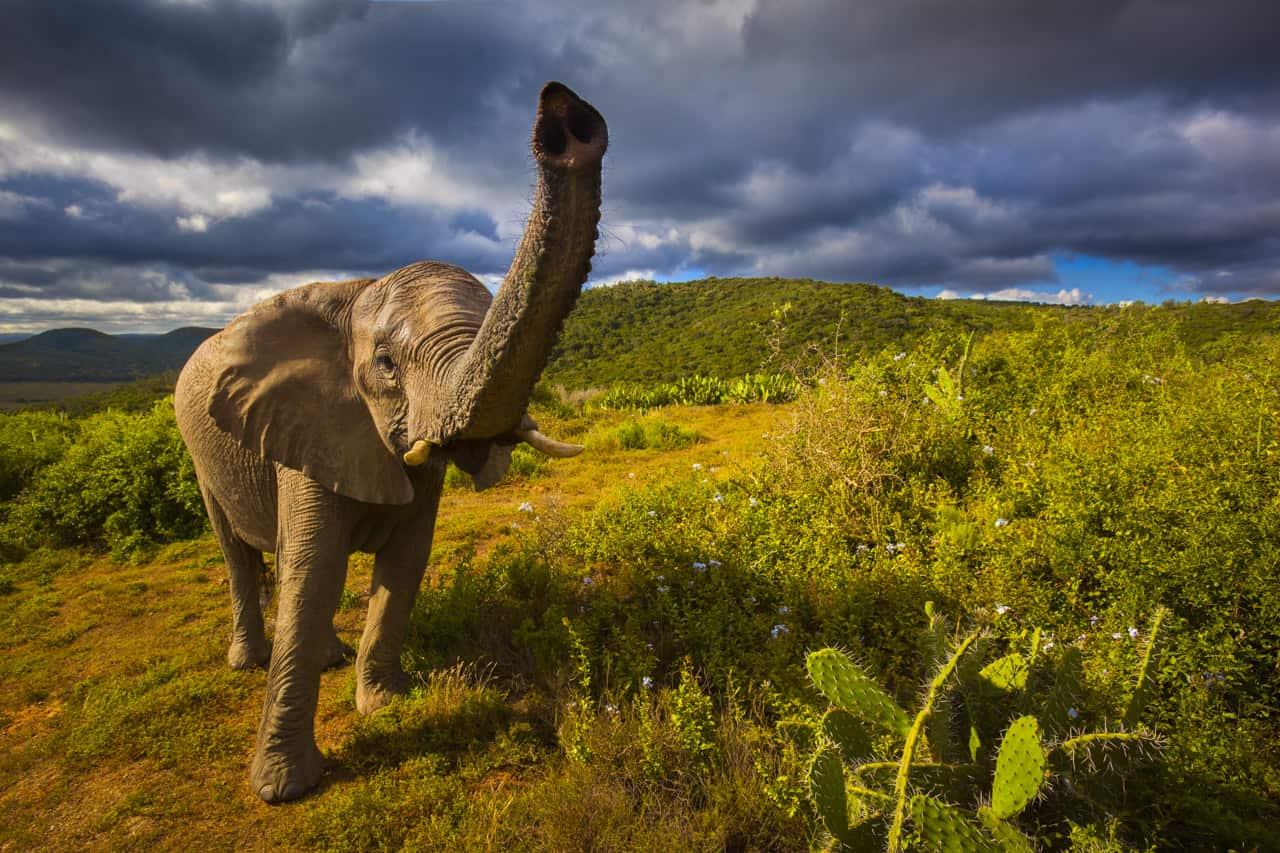 photo safari tips africa elephant