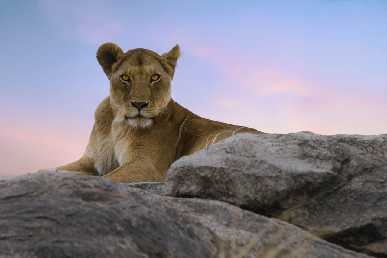 photo safari tips africa