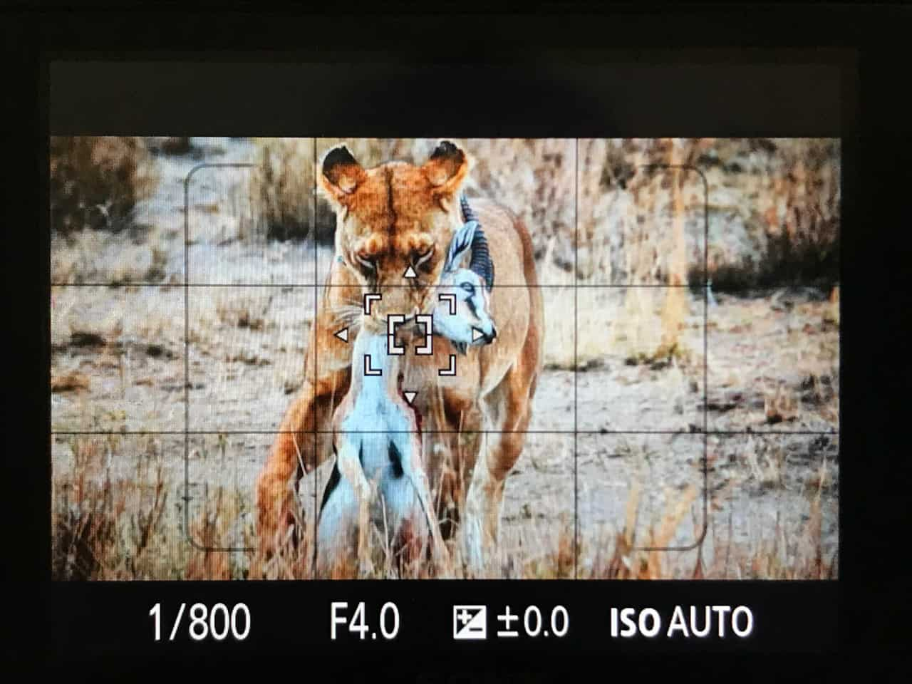 photo safari tips africa spot