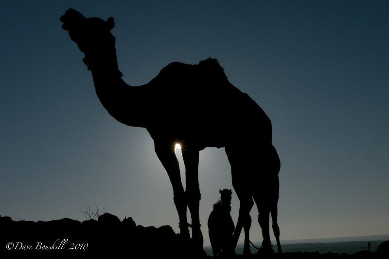 Rajasthan Camel Safari in the Thar Desert
