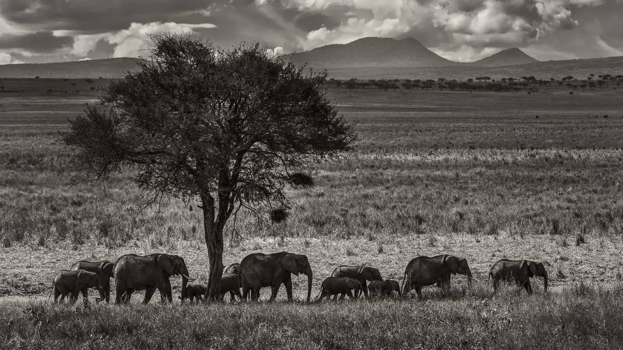 photography tours 2018 tanzania africa elephant crossing