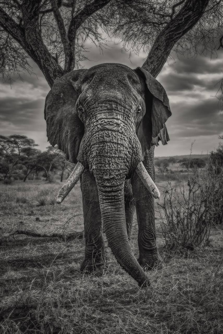 photography tours 2018 tanzania africa elephant