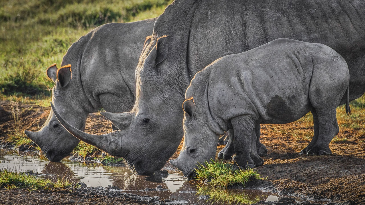 photography tours 2018 tanzania africa rhinos
