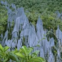 pinnacles-borneo-gunung-mulu-sarawak2.jpg