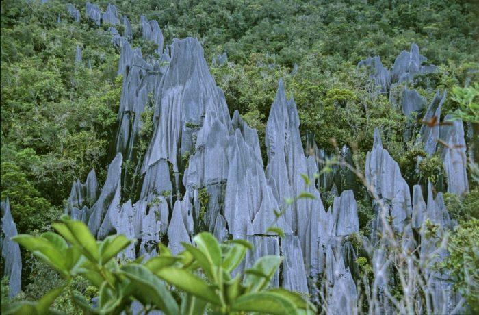 pinnacles of borneo sarawak