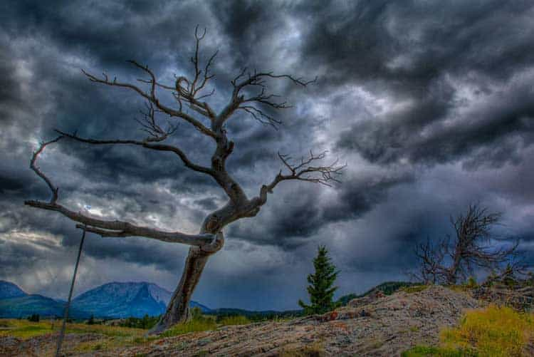 alberta secret places | burmis tree