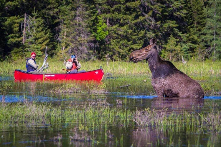 where to visit in canda | algonquin park