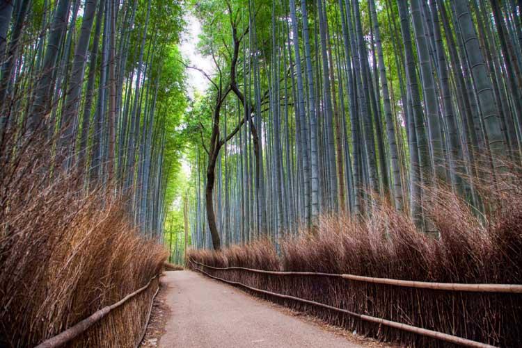 visiter les jardins de kyoto krashiyama